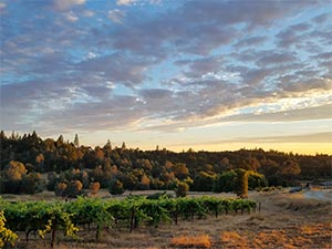 Baiocchi Wines vineyard located in the foothills of the Sierra Nevada mountains of California.